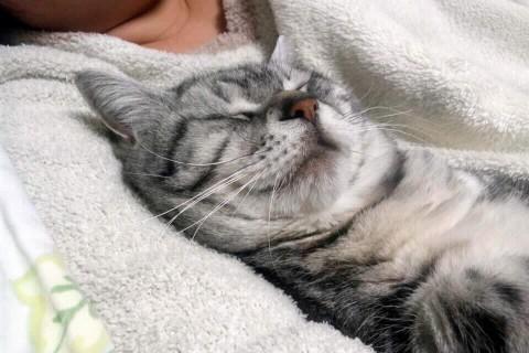 ペコの寝顔