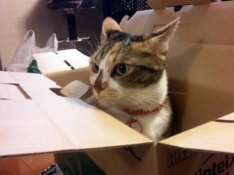 チビは箱が好き