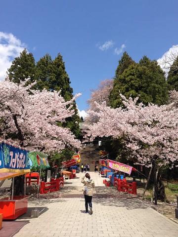 2013/4/19東照宮の桜1