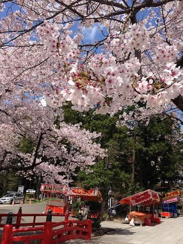 2013/4/19東照宮の桜2