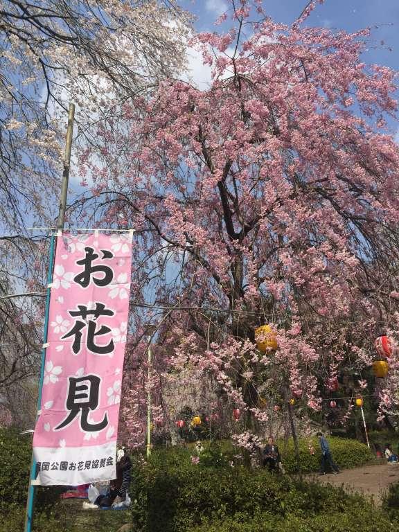 榴岡公園の桜2015