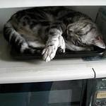ネコ(ペコ)の丸焼き