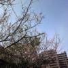 仙台の春はすぐそこ?