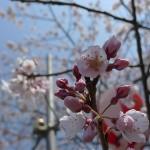 仙台の春は遅い